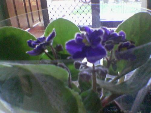 violet-11.jpg